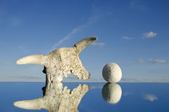 Cow cranium and stone concept on mirror. And sky stock image