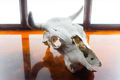 Cow cranium and window concept on mirror flor Royalty Free Stock Photography