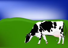Cow of dairy breed Royalty Free Stock Image