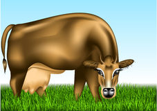 Cow dairy Stock Photos