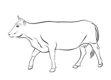 Cow drawing with floral ornament decoration Stock Images