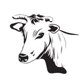 Cow drawing ornament decoration Stock Photos