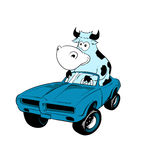 Cow Driving A Car Mascot Royalty Free Stock Photography