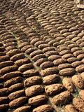 Cow Dung Royalty Free Stock Images