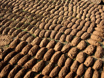 Cow Dung Biscuits Stock Photos