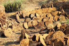 Cow dung cakes. Getting sun dried in rural Uttar Pradesh, India. They are used as cooking fuel by rural households Royalty Free Stock Images