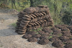 Cow dung cakes Royalty Free Stock Image