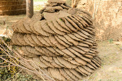 Cow dung cakes Stock Photography