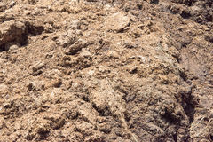Cow dung covered by fly Stock Photo