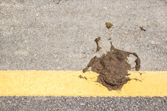 Cow dung on the floor Royalty Free Stock Photos