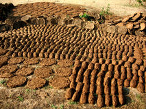 Cow Dung-The Indian Fertiliser Stock Photos