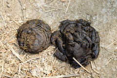 Cow dung Stock Images