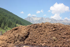 Cow dung on the swiss mountain background Stock Photography