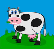 Cow eating grass in a field. Illustration Royalty Free Stock Image