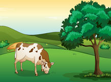 A cow eating grass. Illustration of a cow eating grass in a beautiful nature Royalty Free Stock Images