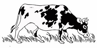 Cow /Eps Vector Stock Photos