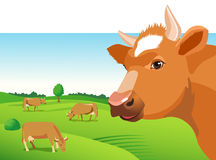 Cow face on a green field background. Cow Face Vector Image. Cow Face on a Green Field. Farm Animal. Cow Face Icon Royalty Free Stock Photos