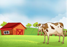 A cow in the farm with a barn house Stock Images