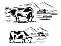 Cow and farm Royalty Free Stock Images