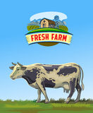 Cow and farm Royalty Free Stock Photos