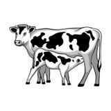 Cow feeds calf. Vector illustration. Farm animal Royalty Free Stock Image