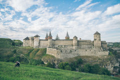 Cow on the feild with old castle on bcakground Stock Image