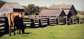 Cow Fence Village Stock Photography
