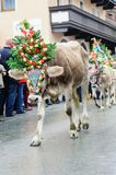 Cow festival with young calf Stock Photo