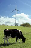 Cow Field. A cow grazing in a field with a wind turbine in the background Stock Photography
