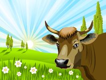Cow in field. Illustration of a brown cow in a field Royalty Free Stock Image