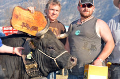 Cow Fighting championships Leytron Stock Photo