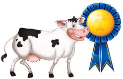 A cow with a first prize ribbon. Illustration of a cow with a first prize ribbon on a white background Stock Photography