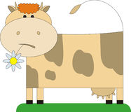 Cow and a flower 2. The cow costs on a meadow. In a mouth at it a flower. It waves a tail and is surprised Royalty Free Stock Photo
