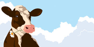 Cow with flower. Cow with a flower on a background of blue sky Stock Photo