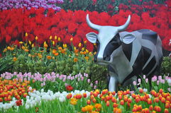 Cow in flower field Stock Images