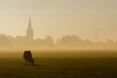 Cow in the fog Stock Photos