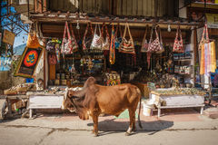Cow in fron of souvenir shop in Rishikesh, India Stock Image