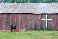 Cow in front of barn with cross Royalty Free Stock Images