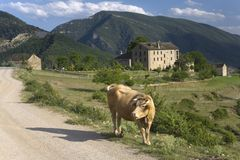 Cow in front of Casa de San Martin Inn, in Aragon, in the Pyrenees Mountains, Province of Huesca, Spain Stock Photography
