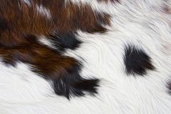 Cow fur Royalty Free Stock Images