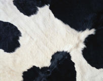 Cow fur as background Royalty Free Stock Image