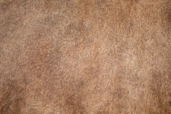 Cow fur, background or texture Royalty Free Stock Photo