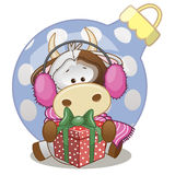 Cow in a fur headphones. With gift vector illustration