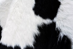 Cow fur (skin)black and white,background Stock Images