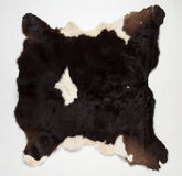 Cow fur (skin). The hide of the cow on white background Stock Image