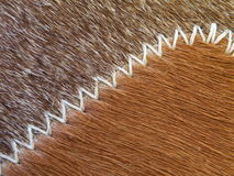 Cow fur texture Royalty Free Stock Image