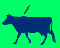 Cow gets an inoculation Stock Photos
