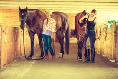 Cow-girl et jockey marchant avec des chevaux dans l'écurie Image stock