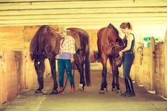 Cow-girl et jockey marchant avec des chevaux dans l'écurie Photos stock
