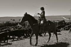 Cow-girl lassoing un veau pendant un rassemblement Photo libre de droits